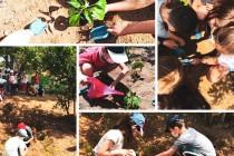 Φυτεύουμε φρέσκα ντοματίνια, αγγουράκια και λαχταριστές κόκκινες πιπεριές