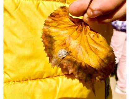 Το φθινόπωρο… στην Αυλή μας
