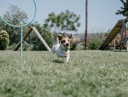 Παρακολουθήστε το εργαστήριο «Τα πρώτα βήματα της εκπαίδευσης ενός σκύλου»