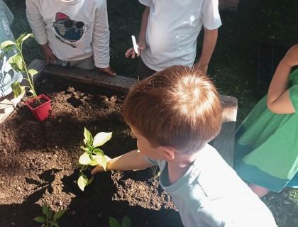 Σπέρνουμε λαχανικά στον λαχανόκηπό μας