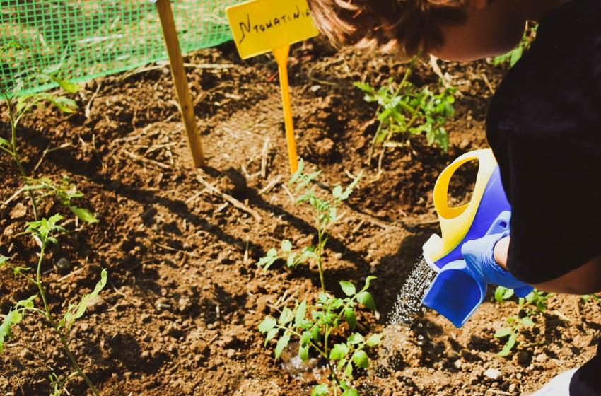 Τα στολίδια του Σχολείου μας, ο λαχανόκηπος και το θερμοκήπιό μας