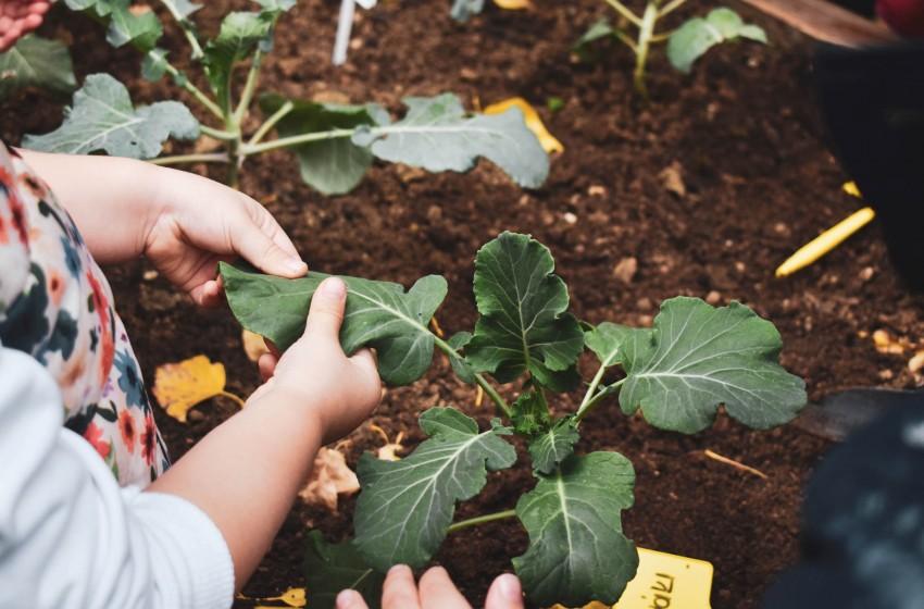 Οι μικροί μας κηπουροί βγήκαν στην αυλή